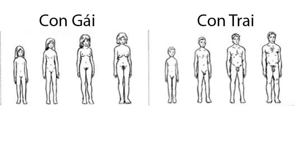 Những thay đổi về sinh lý tuổi dậy thì ở bạn nam và bạn nữ